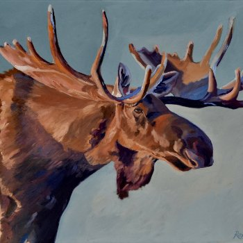 Moose Portriat - By Canadian Artist Roxanne Driedger